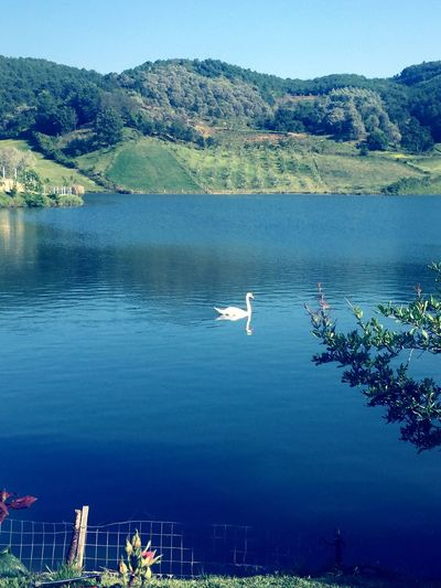 Lake Water Nature Scenics Day Mountain Beauty In Nature One Animal Animal Themes Animals In The Wild Outdoors Likeforlike Flower Head Photographing Nature Beauty In Nature Tranquility Bird Nautical Vessel Swan No People Tree Flying Sky Spread Wings