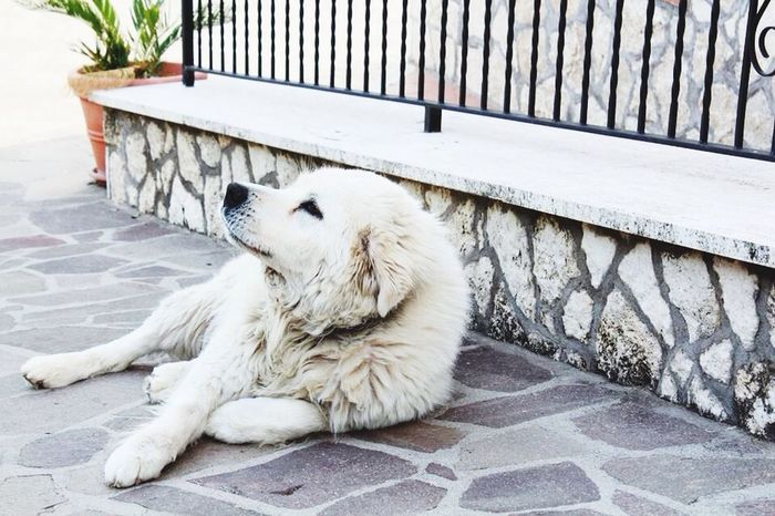 Dog Miss You White ❤️
