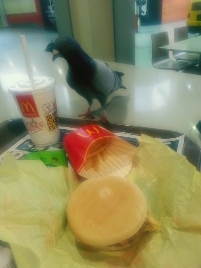 What's with Pigeons strutting about Thinking we owe em shit...get away from my Maccas you