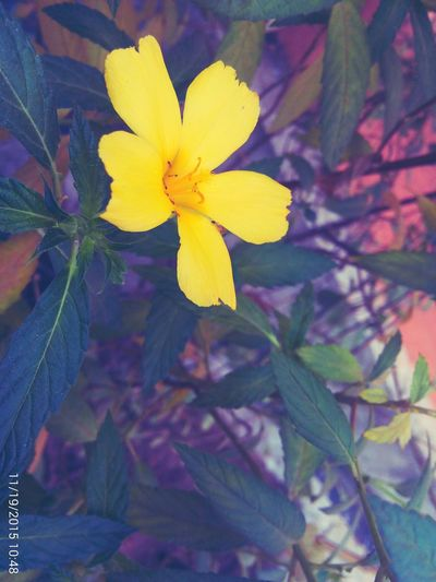 Yellow Flower Taking Photos ❤ Had Fun Ants On A Flower Flower Photography ...reviewing My Pics