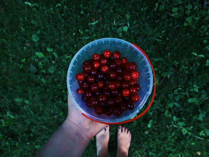 Low section of woman holding cherries in bowl