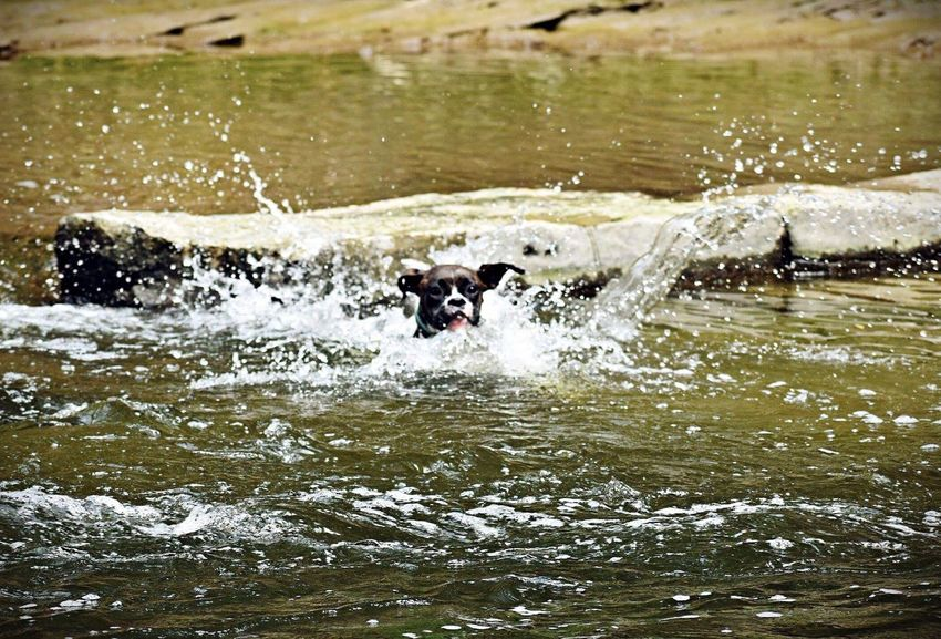 Splash Water Mammal Animal Themes Domestic Animals Animal Pets Vertebrate Splashing Canine No People Group Of Animals Motion Domestic Waterfront Nature Day Herbivorous Dog Outdoors Lake