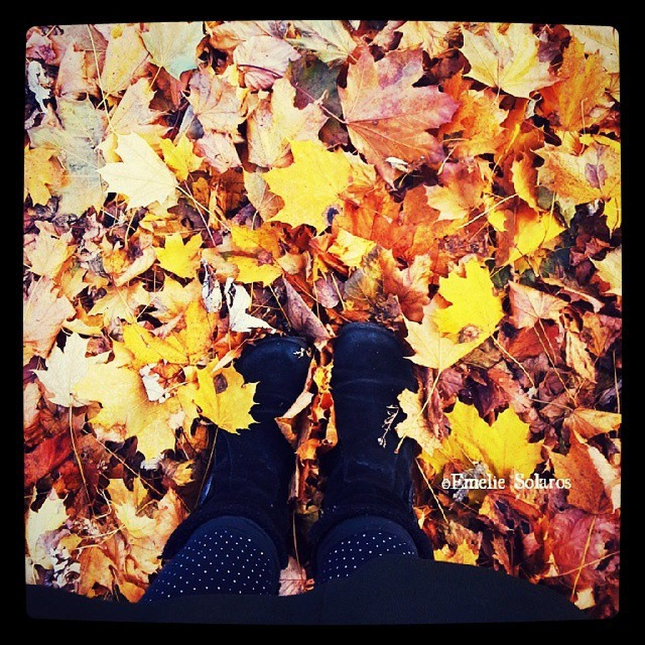 autumn, leaf, change, leaves, low section, shoe, auto post production filter, human leg, maple leaf, one person, dry, fallen, personal perspective, nature, real people, day, standing, maple, yellow, outdoors, close-up, human body part, beauty in nature, one woman only, adult, people