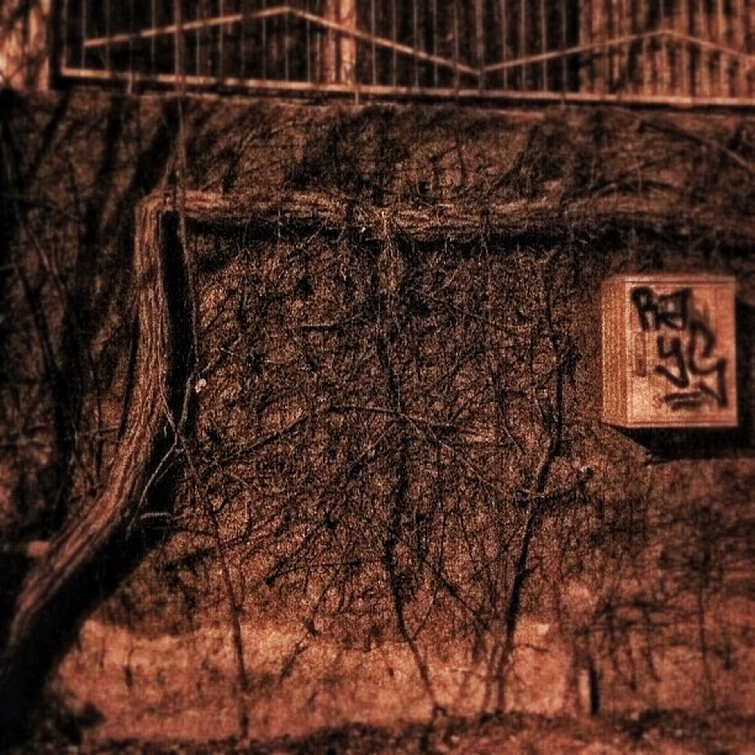 text, communication, wall - building feature, architecture, built structure, close-up, western script, wall, brick wall, building exterior, graffiti, day, no people, outdoors, old, tree, textured, weathered, capital letter, metal