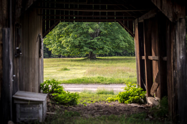 Barn view, the