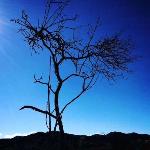 Bare Tree Tree Nature Low Angle View Branch No People Sky Scenics Beauty In Nature Tranquility Silhouette Outdoors Non-urban Scene Tranquil Scene Clear Sky Lone Day Landscape Dead Tree Isolated Sillouette blue Monday Beauty In Nature Sunlight It's That Simple