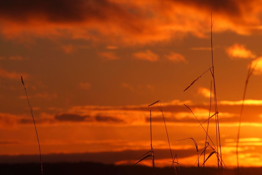 Alternative Energy Beauty In Nature Day Fuel And Power Generation Industrial Windmill Nature No People Outdoors Scenics Sky Sunset Tranquil Scene Tranquility Wind Power Wind Turbine Windmill