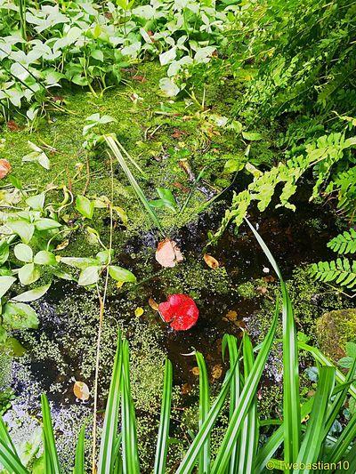 The Pond 🍁🍀💦