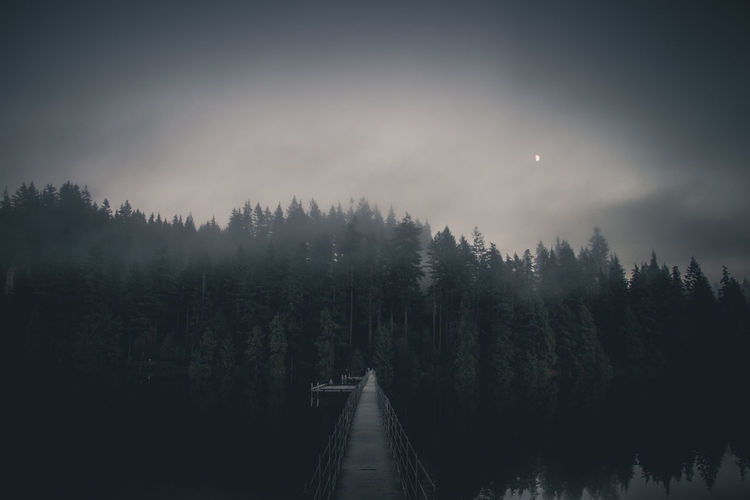 Evening mood Moody Sky Moody Pacific Northwest  PNW Landscape Bridge Bridge - Man Made Structure Beautiful British Columbia Evening Nature Foot Bridge Tree Sky Foggy Fog Silhouette Outline Weather Spruce Tree Scenics Idyllic Lakeside Mist Tranquil Scene Lake Pine Woodland Calm