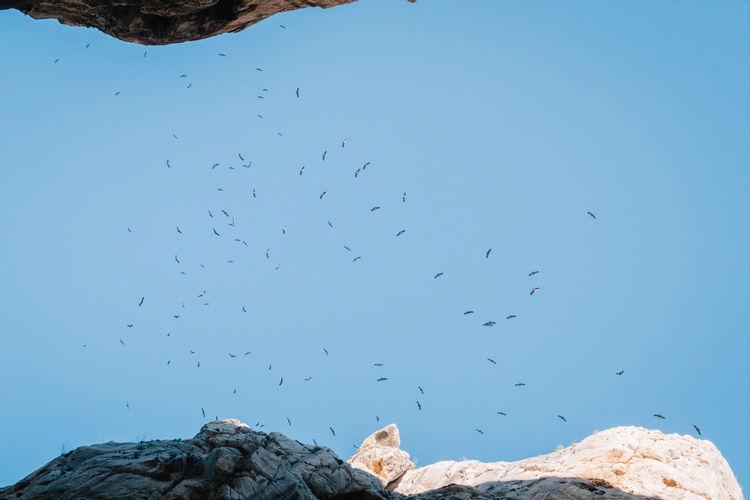 Directly below shot of birds flying in clear blue sky
