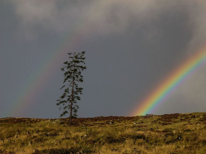 Rainbow Outdoors My Year My View Sky Tree Nature Beauty In Nature No People Tranquil Scene Slieve Donard