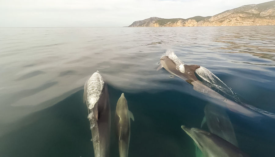 View Of Dolphins In Blue Water