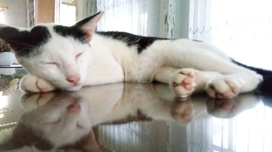 Pets Domestic Cat Domestic Animals One Animal Animal Themes Mammal Sleeping Indoors  Feline Day No People Relaxation Close-up