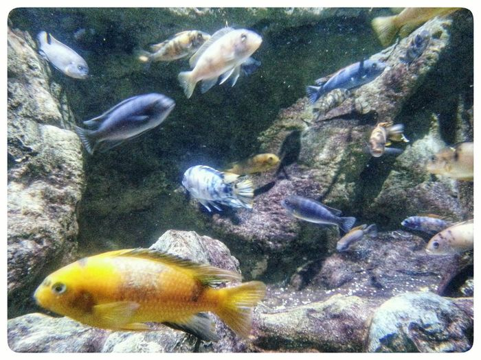 Fish Animal Themes Underwater Swimming Multi Colored Water No People Large Group Of Animals Aquarium UnderSea Sea Life Indoors  Close-up Smartphone Photography Note 2 Acquario Di Genova Through The Window Swimming