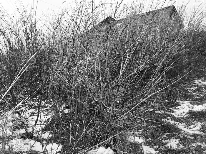 Blackandwhite Monochrome Taking Photos Photography Aomori,japan Okoppe Hallo World Snow