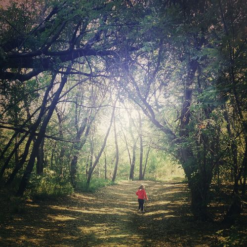 Rear View Of Girl Walking On Footpath Amidst Trees In Forest