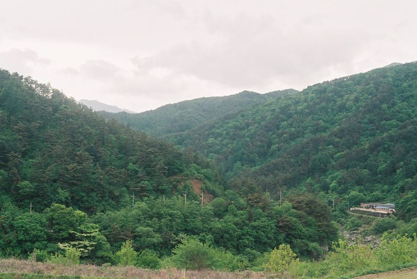 Film Nikon Beauty In Nature Cloud - Sky Day Environment Film Photography Forest Green Color Growth Idyllic Land Landscape Mountain Mountain Range Nature No People Non-urban Scene Outdoors Plant Scenics - Nature Sky Tranquil Scene Tranquility Tree