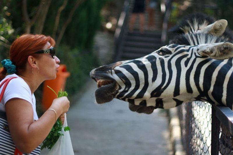 Travel Zoo Крым ялта Yalta Crimea зоопарк