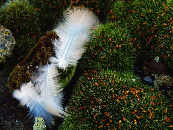 Exploring New Ground Feathers Strong Moss