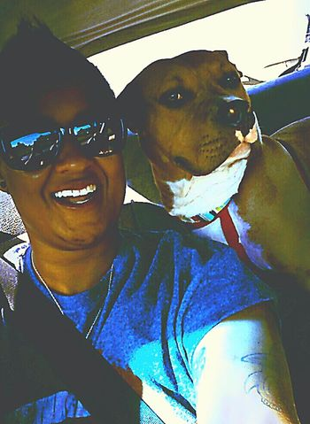 Taking Photos Pitbull Pet Therapy Animal Love Cheese! Hanging Out Roadtrippin' Escaping TasmAdventures Hello World