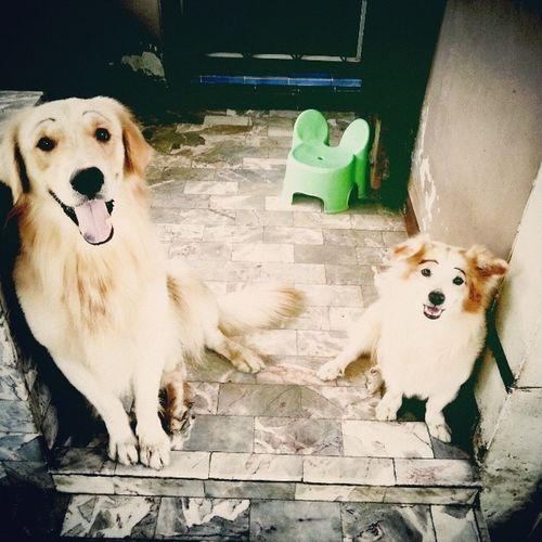 สร้างสีสันให้กับชีวิต ไม่ถามไม่ไถ่ความสมัครใจหมาซ้ากกกคำ ??? Dog Pet13 Goldenretriever Lomography