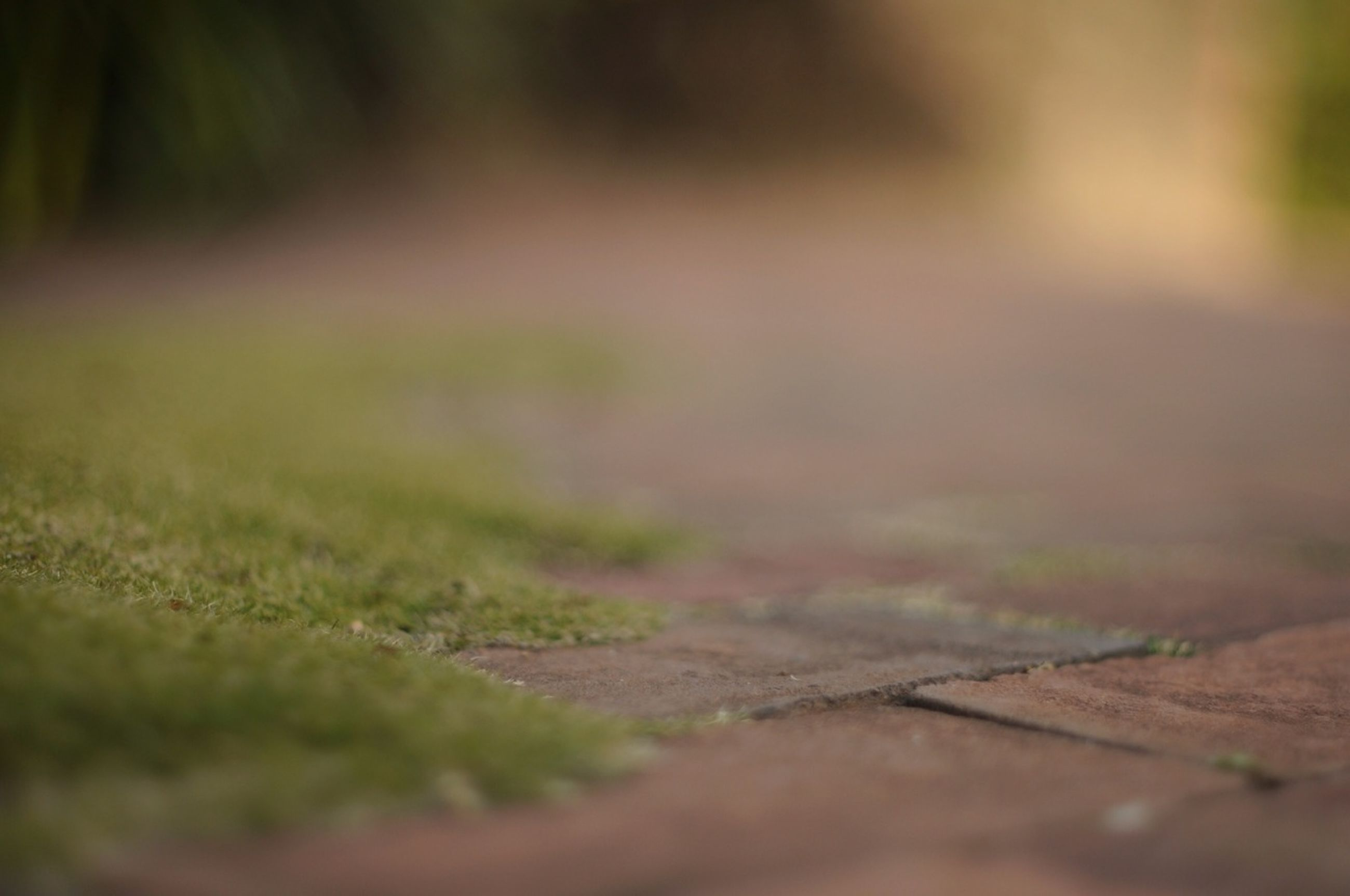 selective focus, surface level, focus on foreground, close-up, nature, outdoors, day, grass, no people, growth, tranquility, plant, green color, field, focus on background, leaf, textured, footpath, moss, the way forward