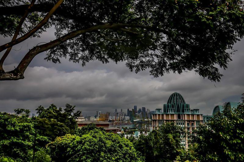 Singapur Tree