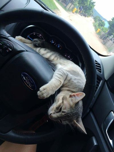 Cat Sleep Time Driving In My Car First Eyeem Photo