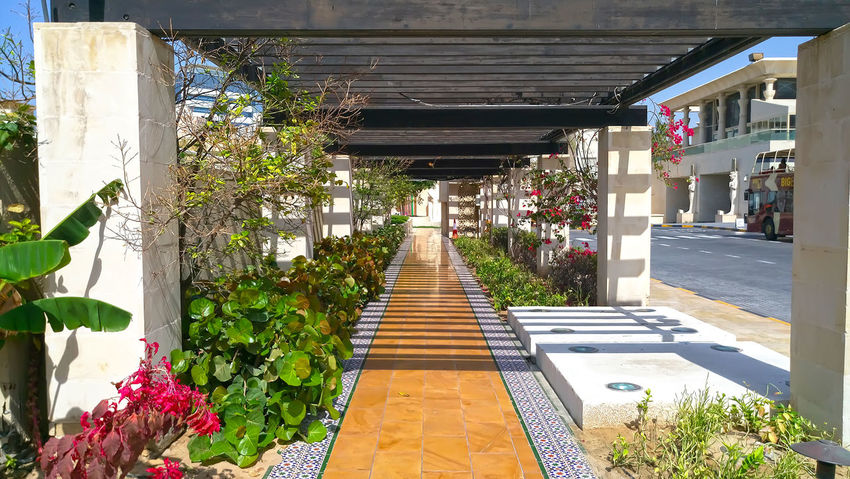 Architecture Building Exterior Built Structure Day Diminishing Perspective Dubai Flower Footpath Growth House In A Row Narrow Pathway Plant Potted Plant Residential Structure Sunlight The Way Forward Tree Vanishing Point Wafimall Walkway