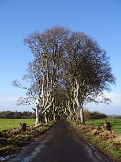 Road Amidst Bare Trees On Field Against Clear Blue Sky