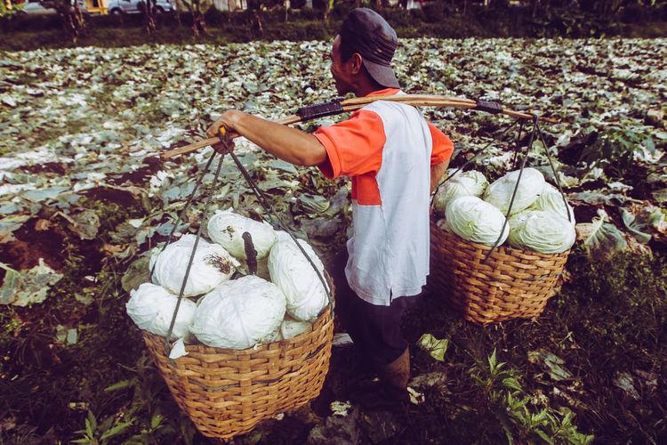Man carrying vegetables in wicker baskets on field