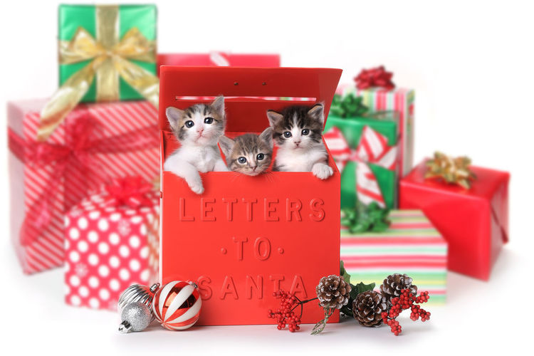 View of kittens in box