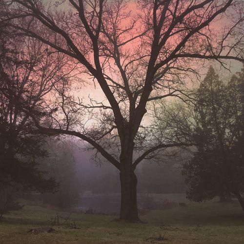 Trees IPhoneography IPS2015Trees My Winter Favorites Golden Hour IPS2016Landscape IPS2016Nature Pastel Power