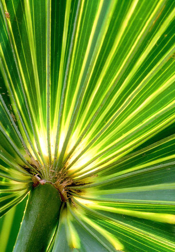 Backgrounds Beauty In Nature Detail Full Frame Green Color Natural Pattern Nature No People Plant