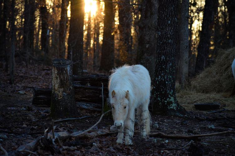 Horse standing on field in forest