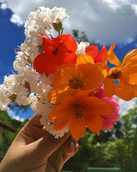 Flowres Sky Céu Flor BR RJ Colorfull Colorfull Flower Clouds Nature Natural Natureza Flower Head Close-up Plant Day Sky