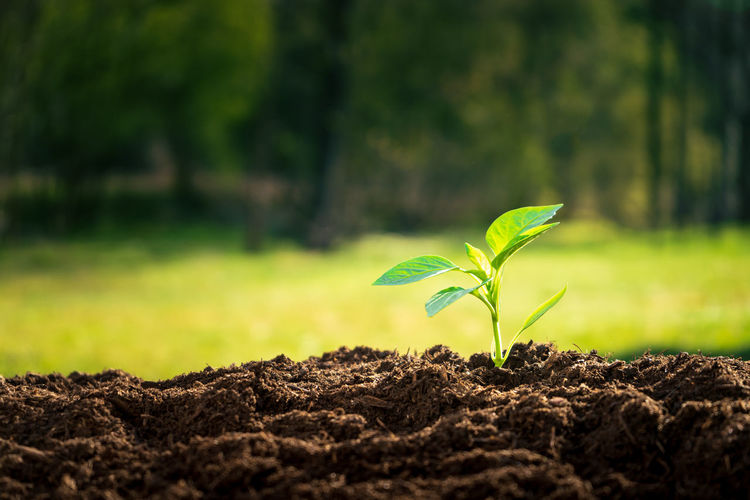 Young green sprout growing in nature in morning light Plant Growth Beginnings Green Color Leaf Plant Part Nature Seedling New Life Land Field Dirt Day Fragility Vulnerability  Sapling Beauty In Nature Close-up No People Outdoors Small Gardening Mud Plantation Soil