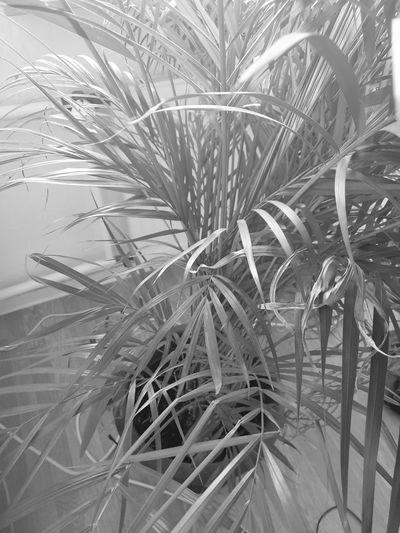 Tree Leaf Palm