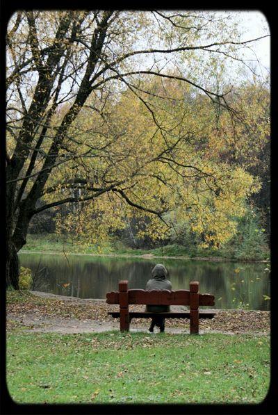 Autumn Park Loneliness Meditation релакс дзен медитация парк грусть осень