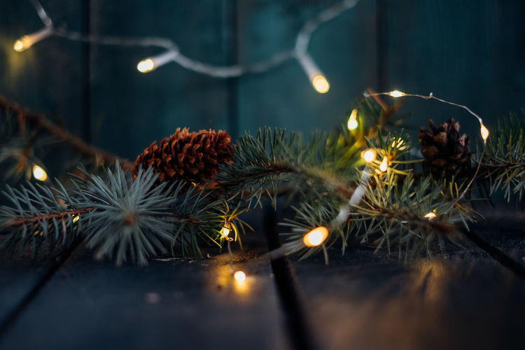 Christmas background with Christmas tree branches, cones and lights Illuminated Selective Focus No People Cones Christmas Background Lighting Equipment Dusk Decoration Growth Celebration Candle Glowing Freshness Green Color Tree New Year Nature Close-up Christmas Lights Copy Space Emeraldgreen Emerald Emerald Background