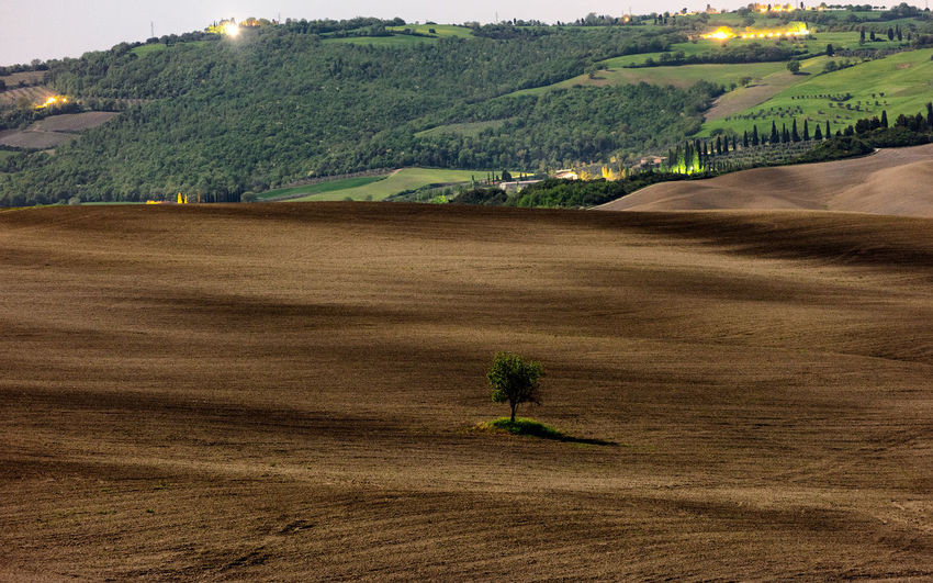 Tuscania, Italy Agriculture Beauty In Nature Day Environment Farm Field Green Color Growth Land Landscape Nature No People Outdoors Plant Rolling Landscape Rural Scene Scenics - Nature Sky Tranquil Scene Tranquility Tree