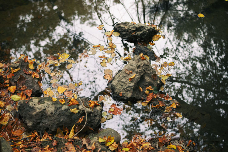 Plant Nature Day Tree Leaf No People Beauty In Nature Plant Part Growth Focus On Foreground Flowering Plant Flower Water Outdoors Autumn Close-up Tranquility Vulnerability  Lake Change Leaves Lichen #rocks