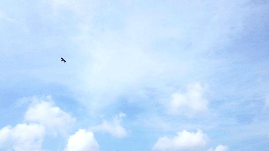 Blue Sky, Bird, Clouds..