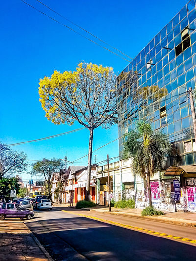 Flowering Acacia tree in the city Yellow Flowers Flower Road City Sityscapes Argentina Posadas Latin America Tourism Vacations Citytraffic Flowering Tree Acacia Ellow Sky Building Building Exterior Urban Scene Office Block Architecture Vandalism