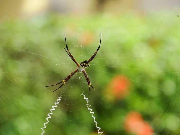 Spider Spider Web Survival Insect Animals In The Wild Web Focus On Foreground One Animal Nature Animal Themes Animal Leg Animal Wildlife Close-up Fragility No People Outdoors Intricacy Day Complexity Full Length