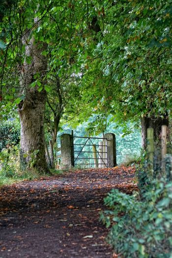 Sheffield Round Walk Country Path Countryside Landscape Country Living Country Road Countryside Yorshire Dales Uk Yorkshire Dales Yorkshire England, UK Peak District Northern England Peak District  Gate Gate Photography English Countryside Tree Plant Nature Growth Day No People Park Tranquility Beauty In Nature Footpath The Great Outdoors - 2018 EyeEm Awards