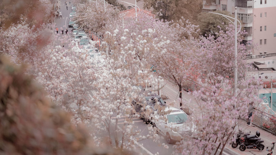 High angle view of cherry blossom by buildings in city