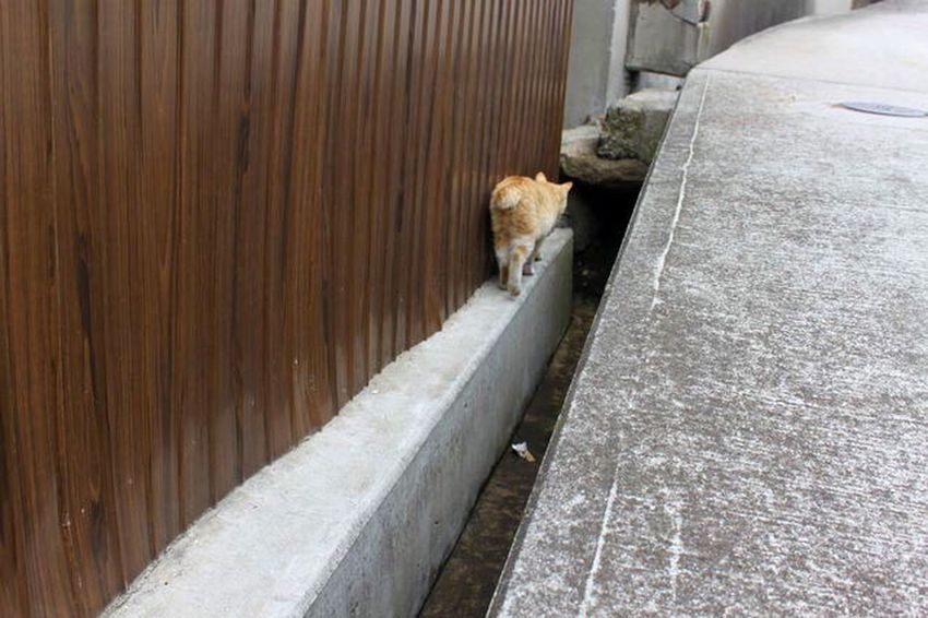 ふりふりお尻 Cat 猫 男木島