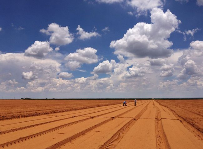 Marking off research plots in a large agricultural field. Cloud - Sky Agriculture Research Two People People Field Rural Scene Landscape Skyscape Sand Day Beauty In Nature Scenics Outdoors Work Rows Rows Of Things Crooked Rows Production Agriculture Bare Gound Red Soil Betterlandscapes