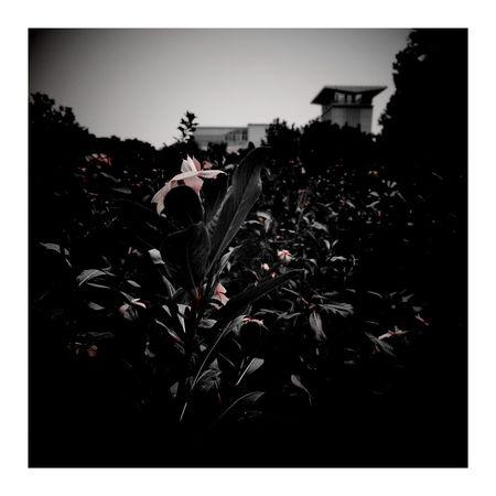 Outdoors CityLifeStyle Vignette Art 南园滨江绿地 Autumn Shanghai, China 秋天 City 秋色 上海.中国 Vignette City Street House Autumn Colors Autumn Leaves Road Red Color Flower Red